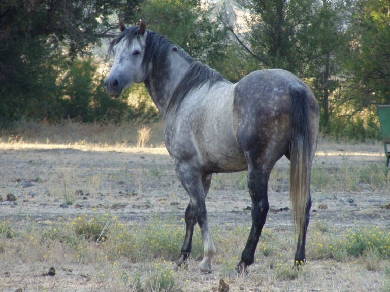 Stonyford Ranch Horses For Sale